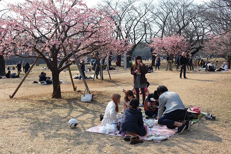 Spring time and ume blossoms in Yoyogi Park