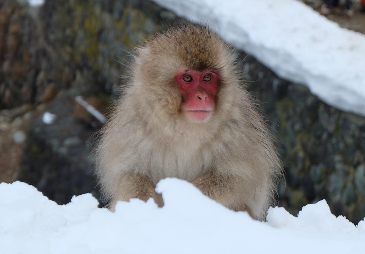 Snowmonkey11