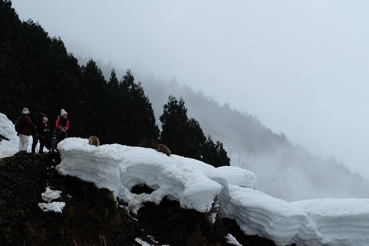Snowmonkey12